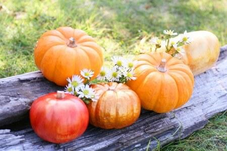 秋の収穫かぼちゃ